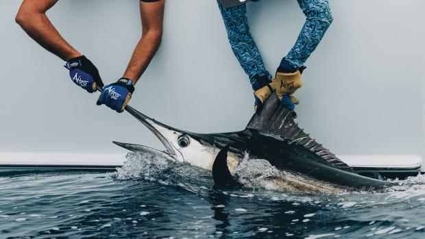 prm-main-fish-tagging