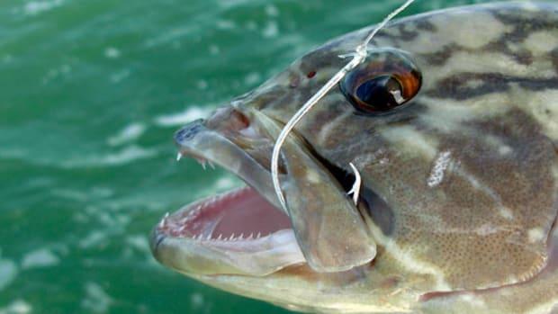 fishhook-prm.jpg promo image