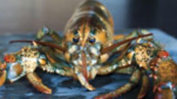 lobster_prm.jpg promo image