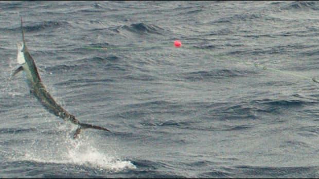 sailfish_prm.jpg promo image