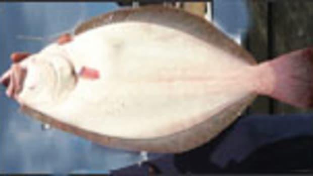 flounder_prm.jpg promo image