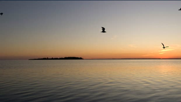 jt-assateague-birds_575x305.jpg promo image