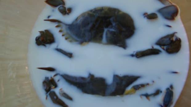 Crab prep step 4