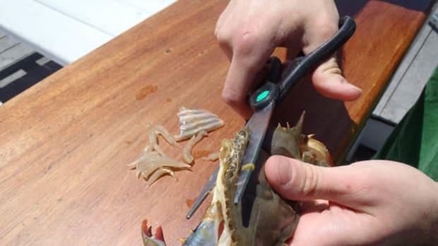 Step 3 crab prep