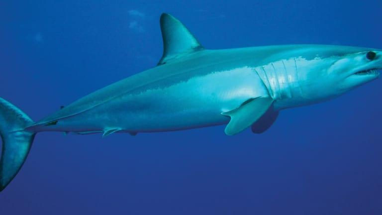 A Story of Man vs. Shark
