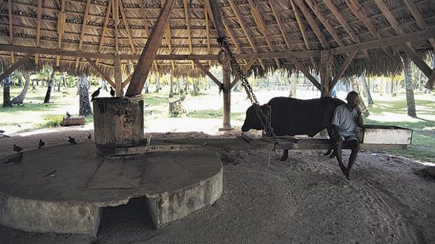 If you ride from the main part of town to Anse Source D'Argent Beach, you'll pass a park where the locals still use oxen power to grind coconuts out of their shells.
