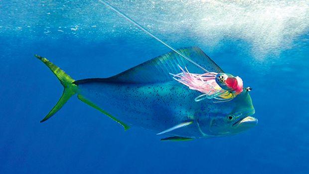 costa_palmas_fishing-prm2.jpg promo image
