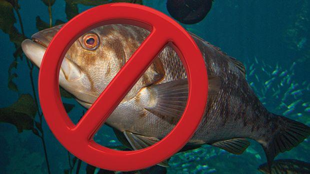 no-fishing-prm650.jpg promo image