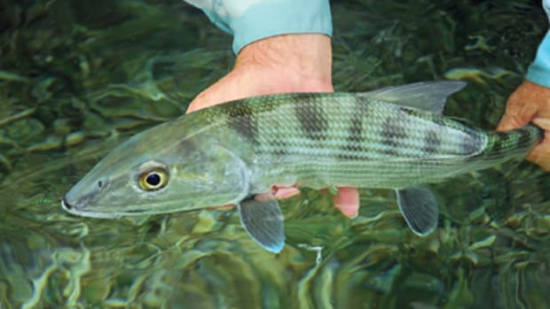 If you want to catch bonefish in big numbers, Belize has what you're looking for.