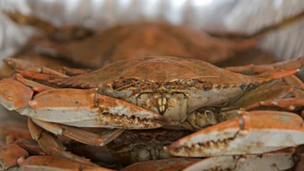 crab.jpg promo image