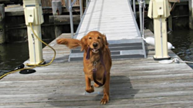 dog-safety-main.jpg promo image