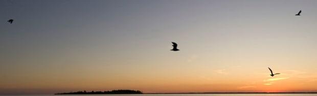 jt-assateague-birds_600w.jpg promo image