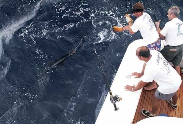 bertram630-yacht-g2.jpg promo image