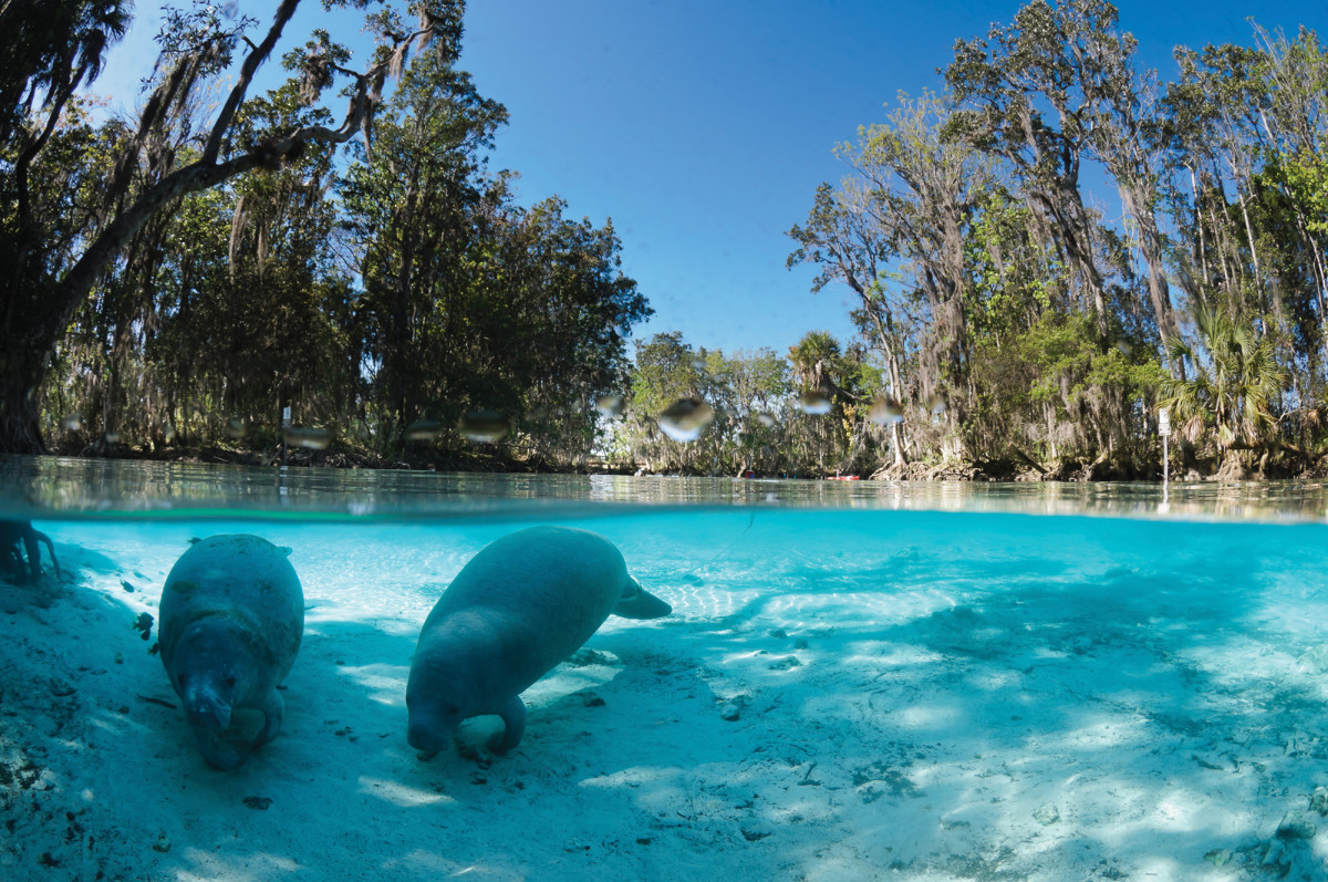 Homosassa Springs, FL