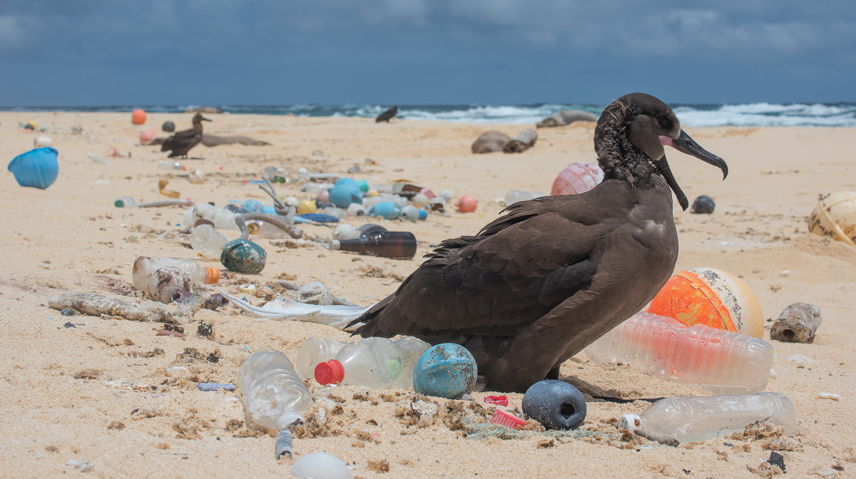 prm-Bird-surrounded-by-plastic-photo-by-Matthew_Chauvin