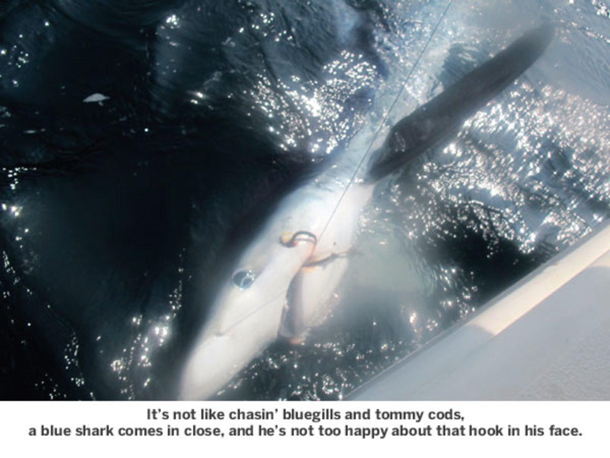 Hooked blue shark