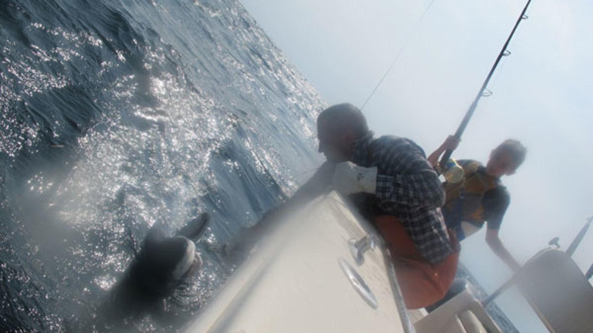 Dehooking a shark
