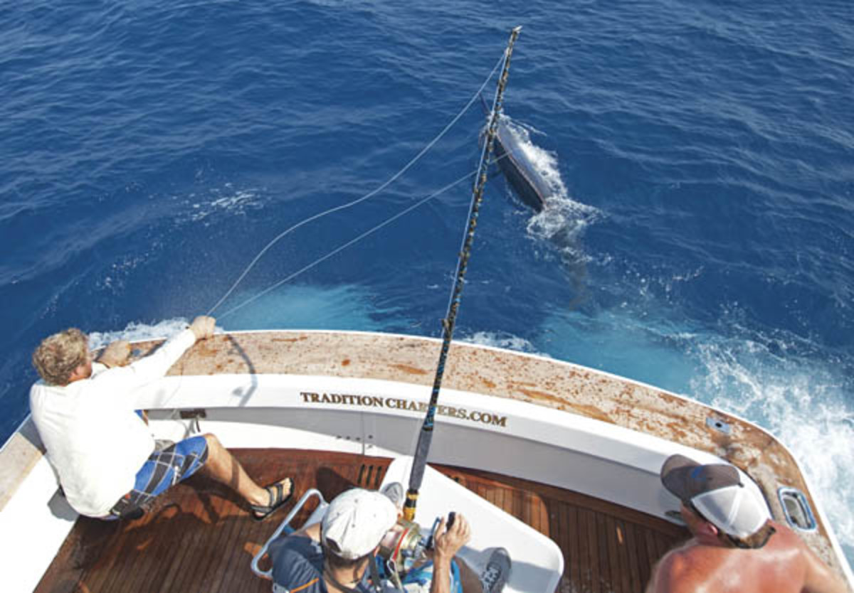 Black Marlin fishing in Austrailia Photo by Scott Kerrigan