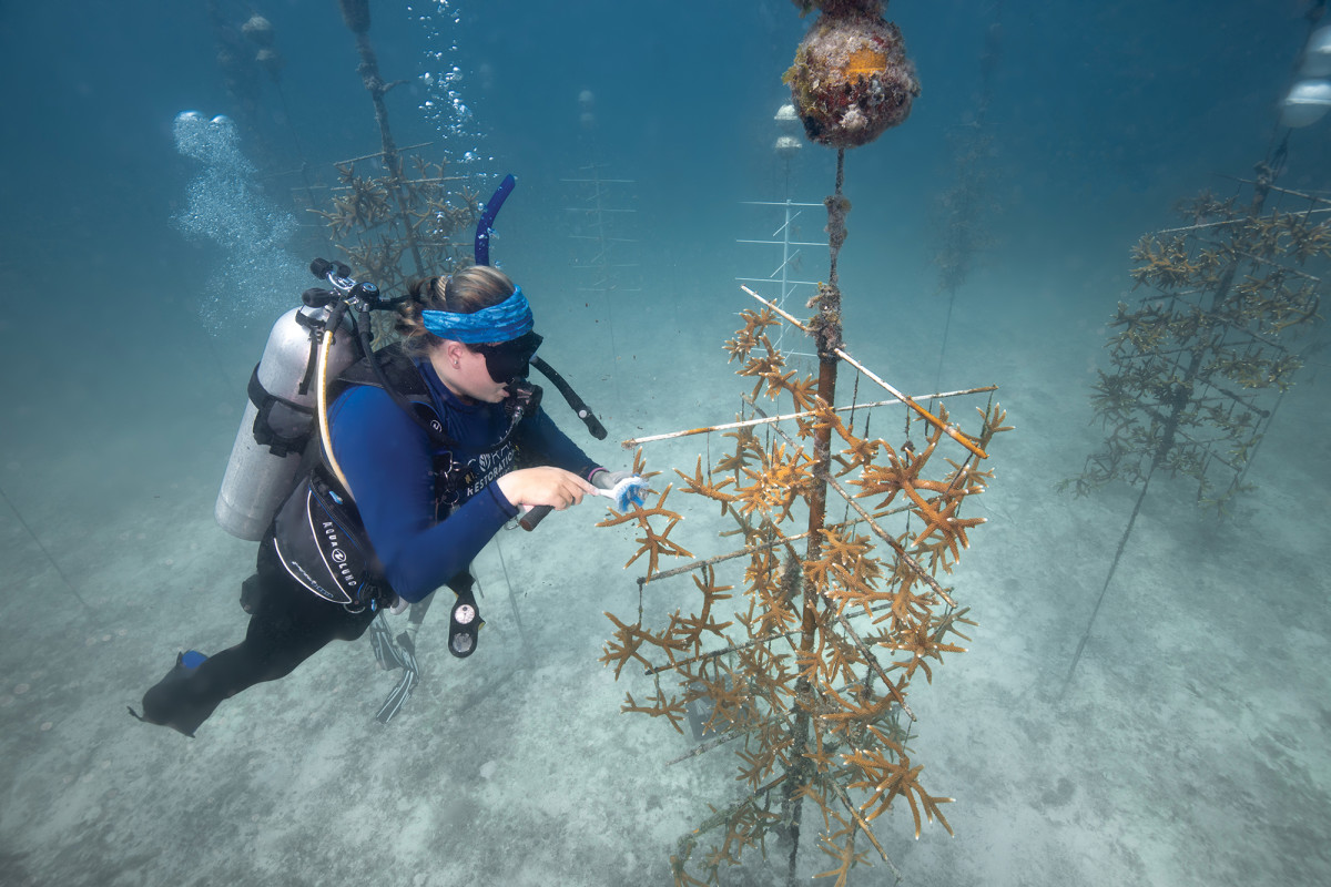 Cleaning the PVC tree farms is just one of the maintenance chores of regrowing a coral reef.