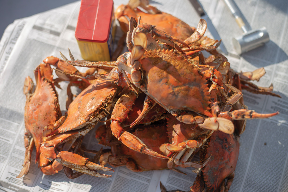 06-things-crabs-IMG_4120