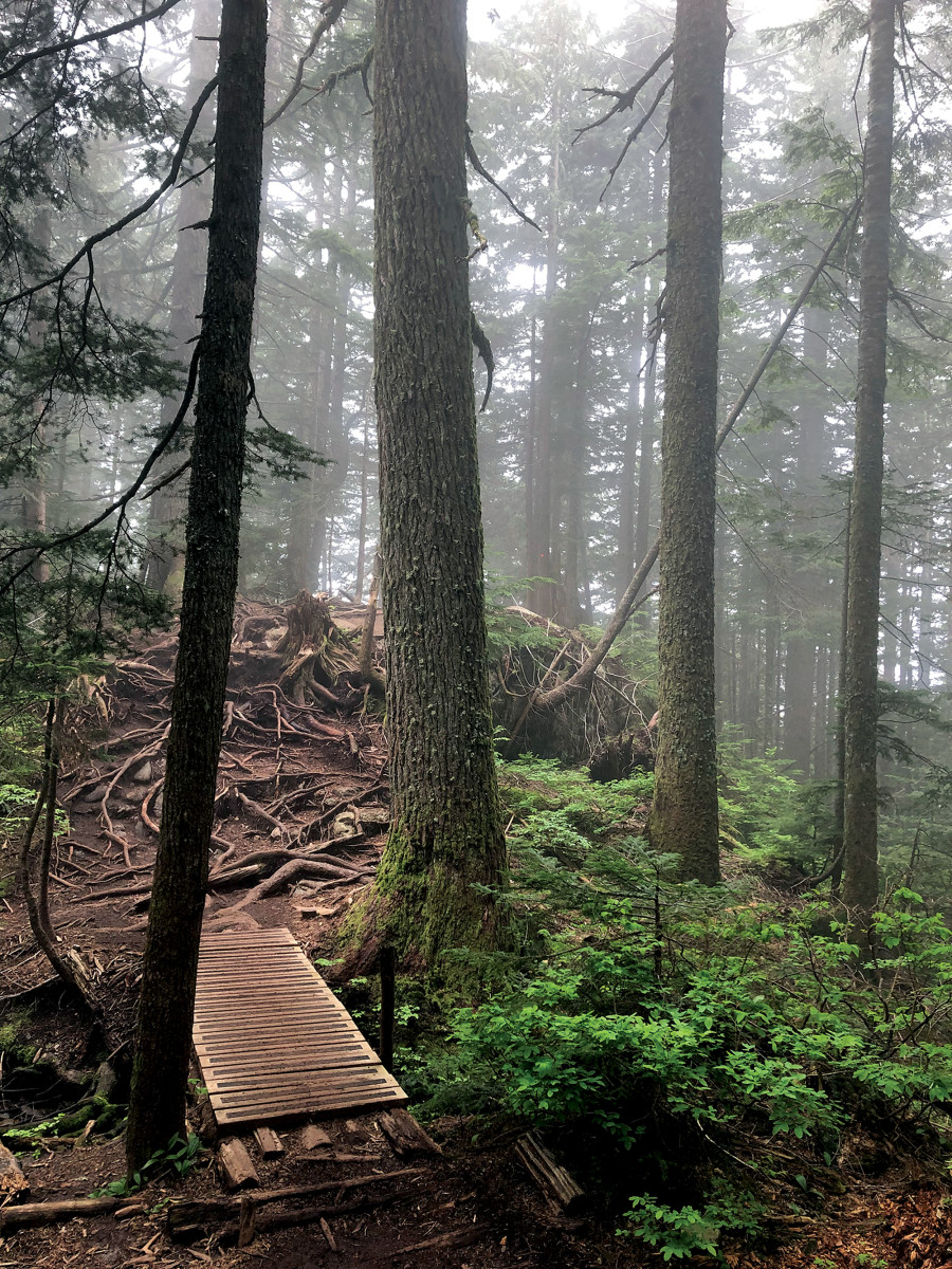 Unlike the Grouse Grind, the BCMC trail is a much more visceral experience with nature.