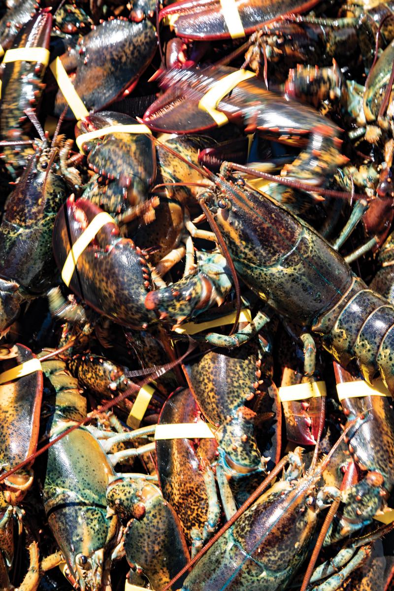 05-lobsters
