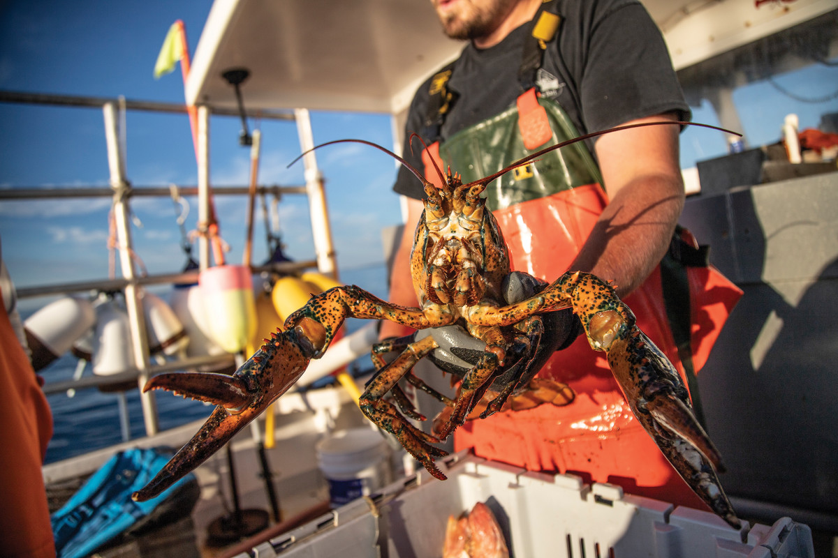 07-lobster