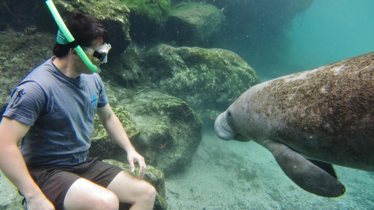 Daming-underwater