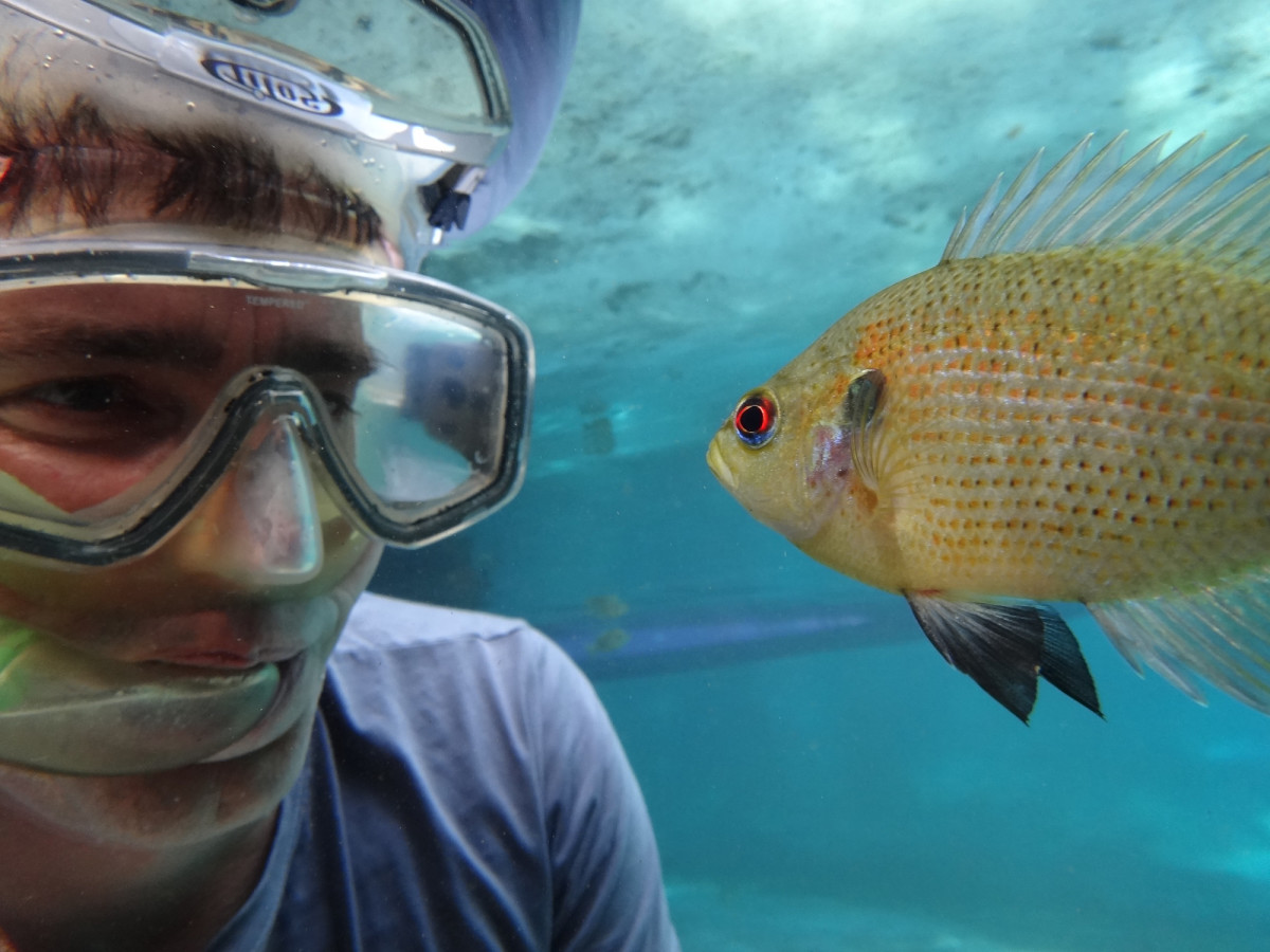 Leloup-with-cichlid